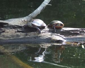 08-Turtles