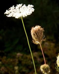 017-BigSky-Weeds