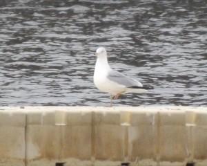 039-Seagull-LakeAnna-HighPoint