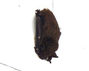 02-Bat-Miller