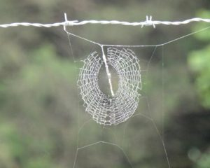 023-Spiderweb