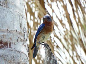 040-FL-CrystalRiver-Bluebird