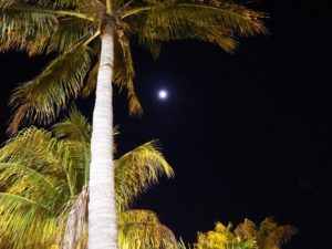 065-FL-PuntaGorda-Palm-Moon
