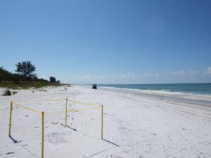 077-Fl-Sanibel-TurtleNest