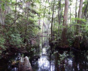 026-FirstLanding-Swamp
