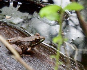 029-FirstLanding-Frog